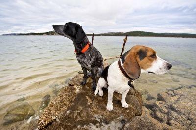 Secur-iD am Halsband von Hund und Katze
